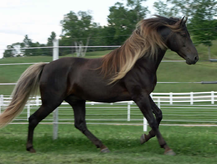 2sv1t0p - unusual horse colors