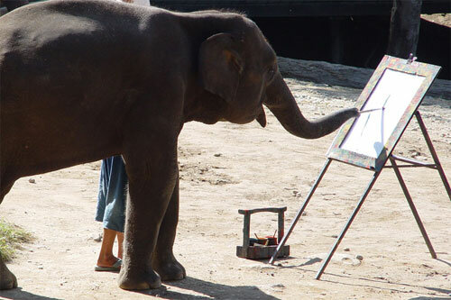 3 - 14 animals that can paint