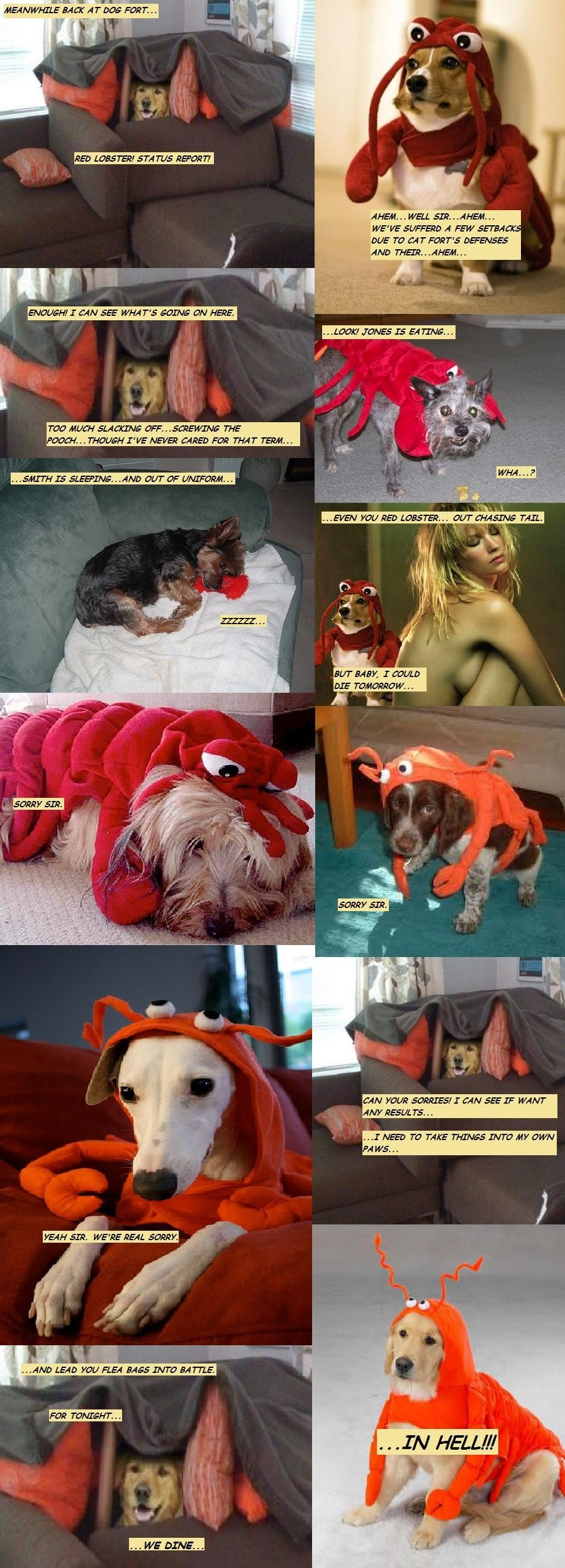 dogs lobster outfits