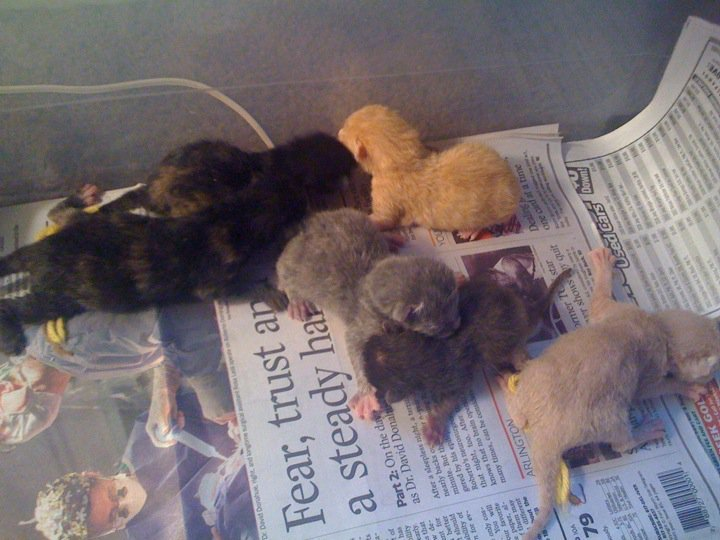 38039 1451102951974 1065253547 31304102 2456009 n - my cat is taking care of her kittens