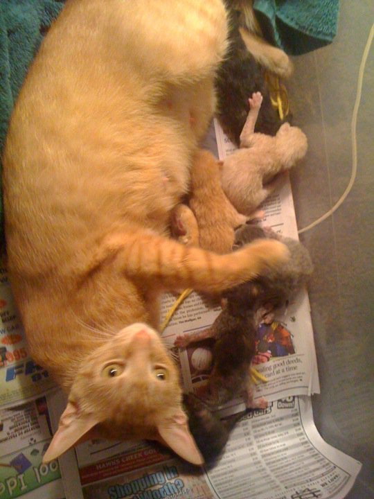 38353 1451104512013 1065253547 31304104 3717402 n - my cat is taking care of her kittens