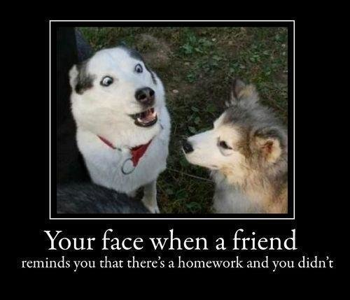 395205 176197762480100 126210800812130 216007 1725046874 n - some funnies for your afternoon #10