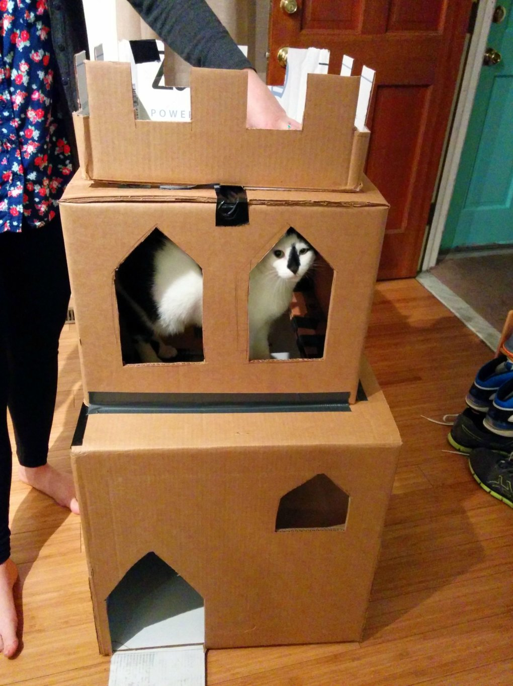 39l82as - why don't we build cardboard castle to our cats? this is how to do it.