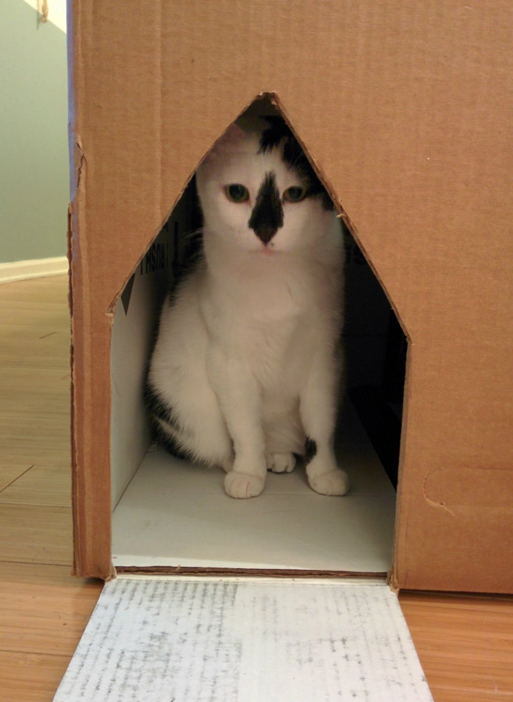 3a67bwt - why don't we build cardboard castle to our cats? this is how to do it.