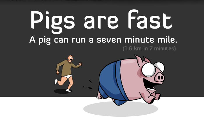 4 - 5 reasons pigs are way more awesome than you