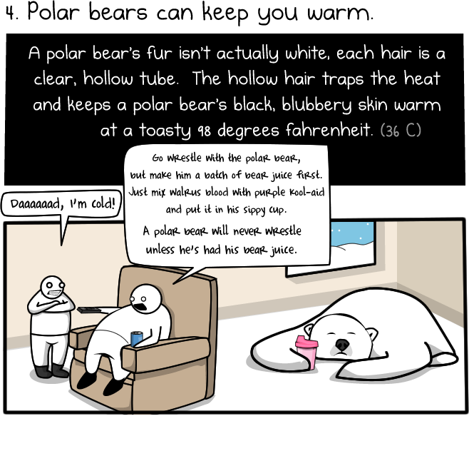 4 - 6 reasons to ride a polar bear to work