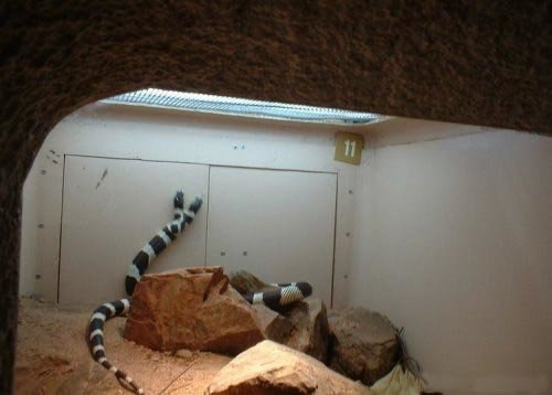 4 - rare snake with 2 heads!