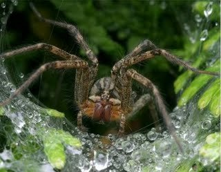 4 - spiders< i hate these things