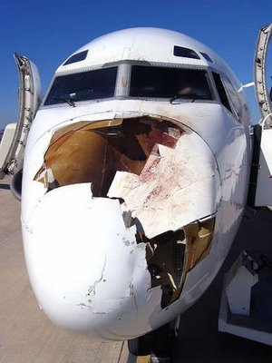4 - what happens when a bird hits planes