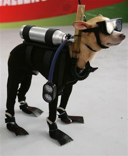 45146 422399829607 34687154607 4873910 957012 n - dog in diver suit