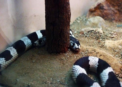 5 - rare snake with 2 heads!