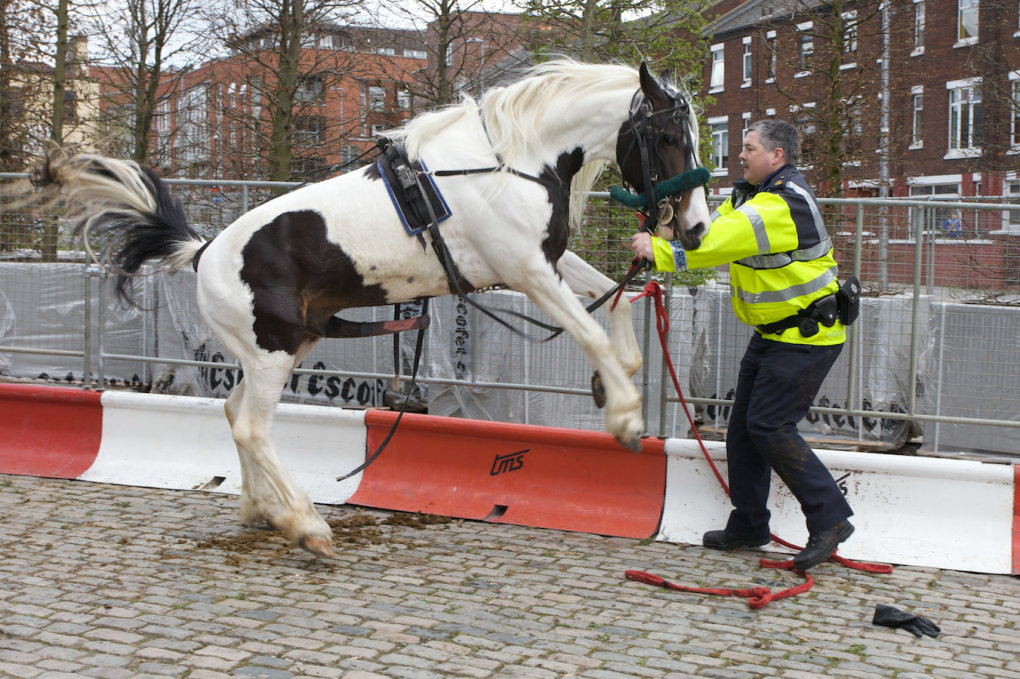 6 - meanwhile, at the smithfield horse fair