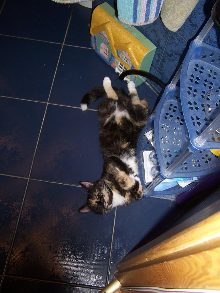 6 - my cat's ultimate sleeping positions
