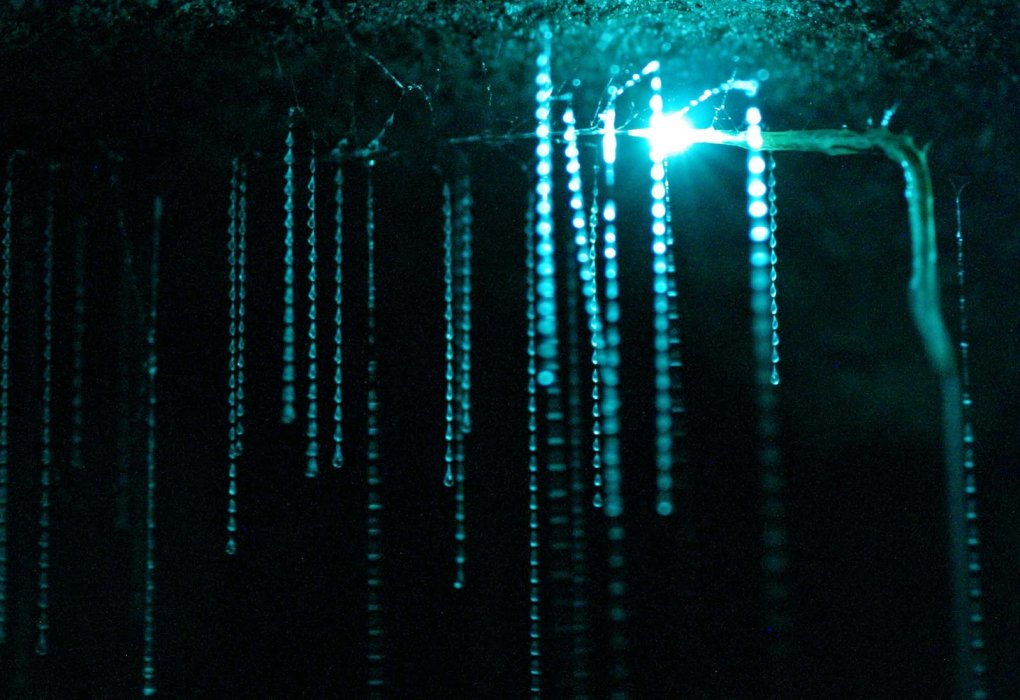 6 - spectacular view inside waitomo caves