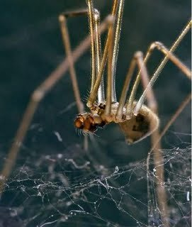 6 - spiders< i hate these things
