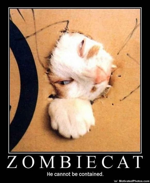 633553764286102109 zombiecathecannotbecontainedmoticats s580x710 7351 580 - huge funny pic collection