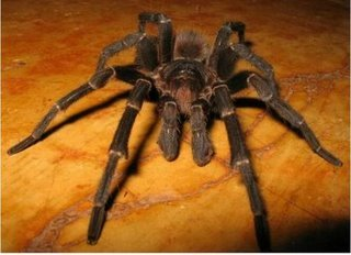 7 - spiders< i hate these things