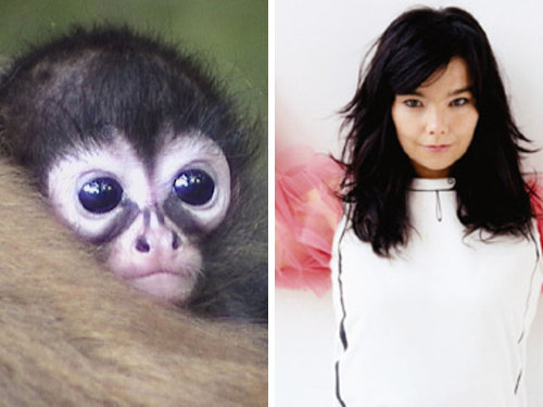 80917775 - celebrity and their animal twins.....