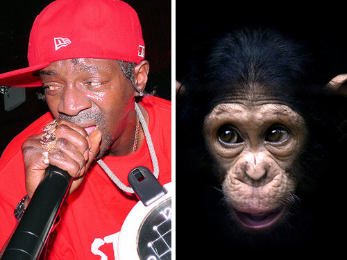 80917776 - celebrity and their animal twins.....
