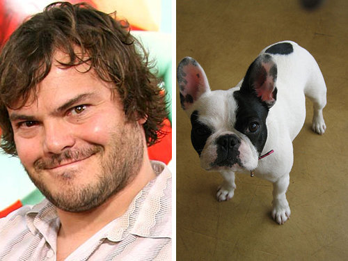 80917780 - celebrity and their animal twins.....