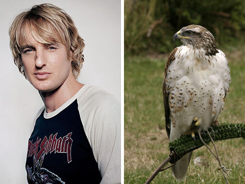 80917785 - celebrity and their animal twins.....