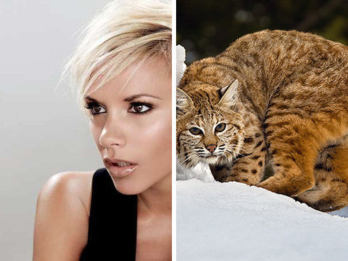 80917786 - celebrity and their animal twins.....