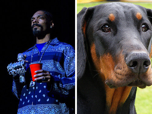 80917792 - celebrity and their animal twins.....