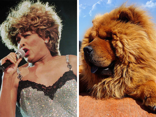 80917794 - celebrity and their animal twins.....