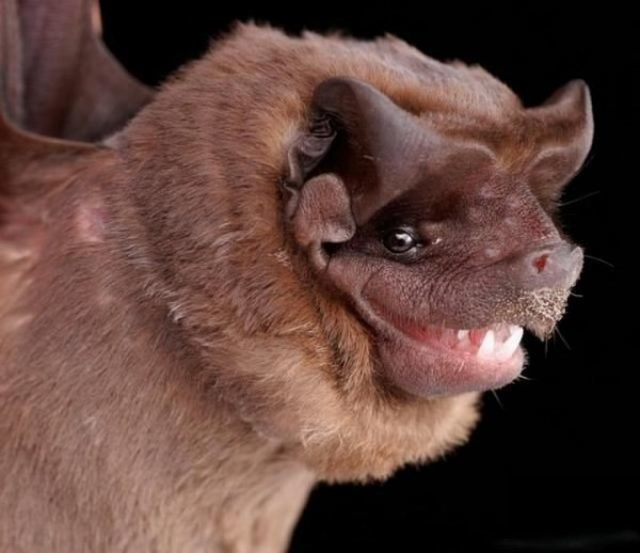 80957801an2 - gallery of bat face