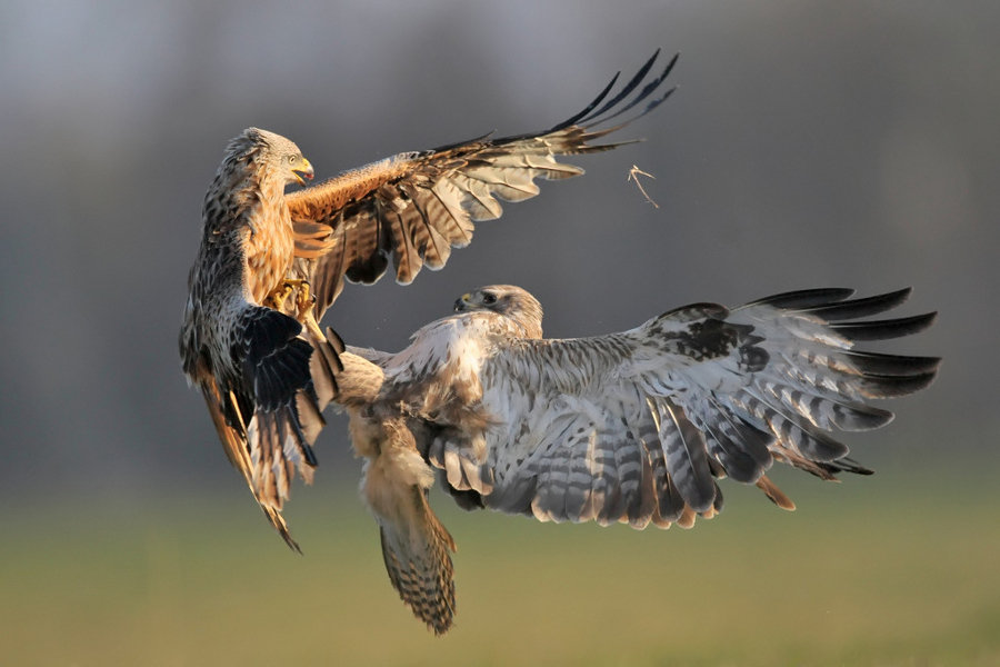 874716 - beautiful photos of eagles engaged in aerial combat
