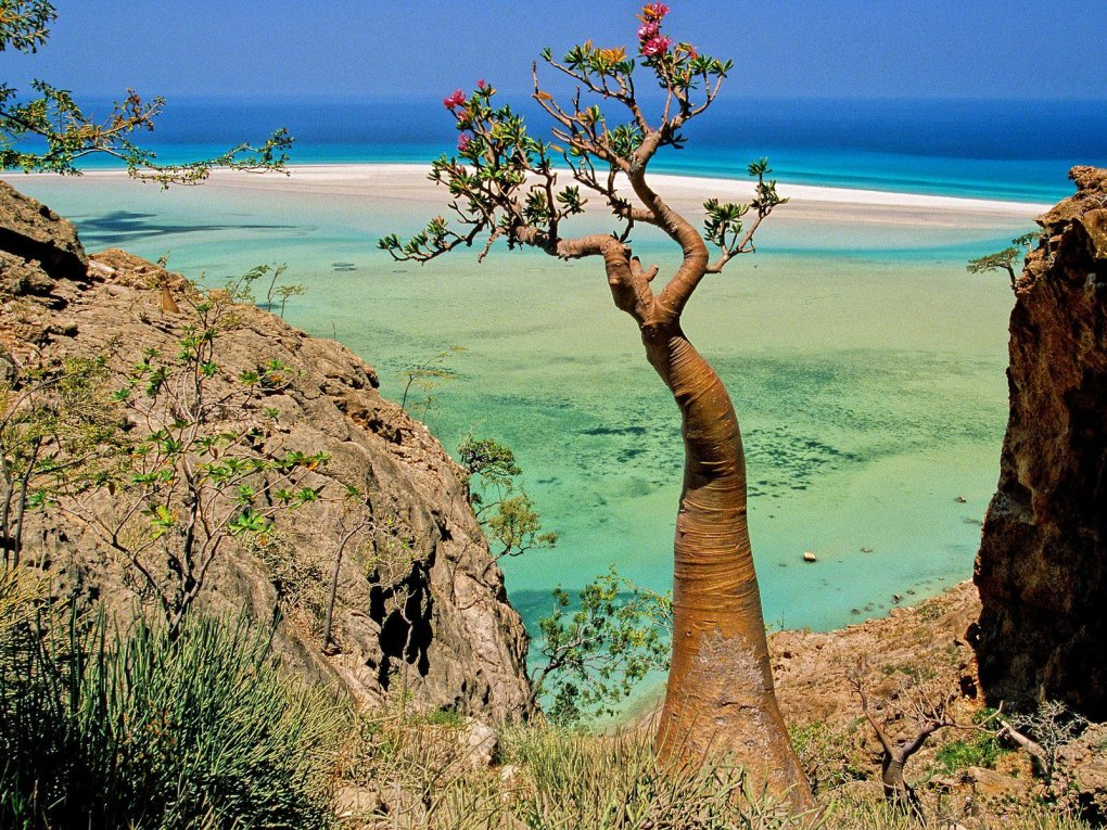 acnuka3 - socotra island, yemen. one of the most alien looking places on earth.