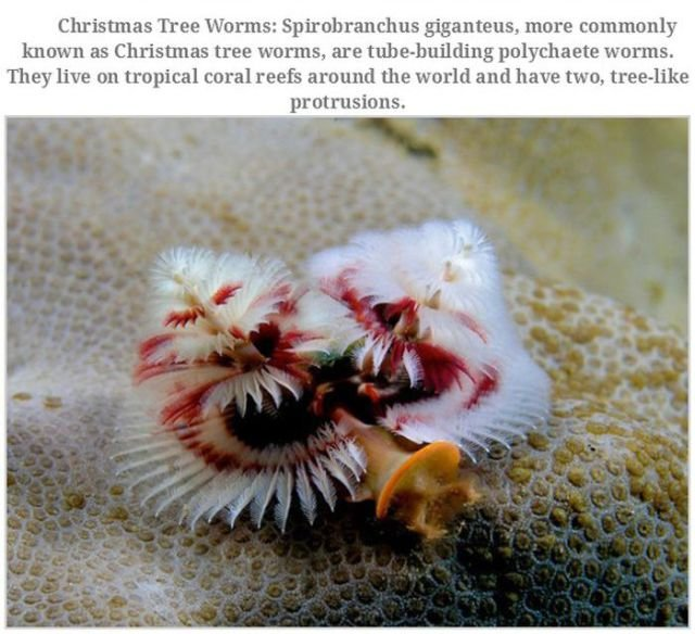 bizarre creatures10 - bizarre creatures and animals that are actually real