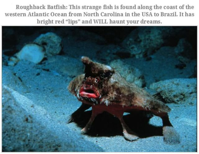 bizarre creatures12 - bizarre creatures and animals that are actually real
