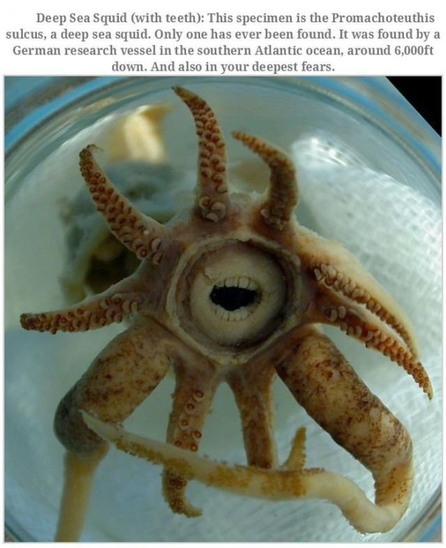 bizarre creatures16 - bizarre creatures and animals that are actually real