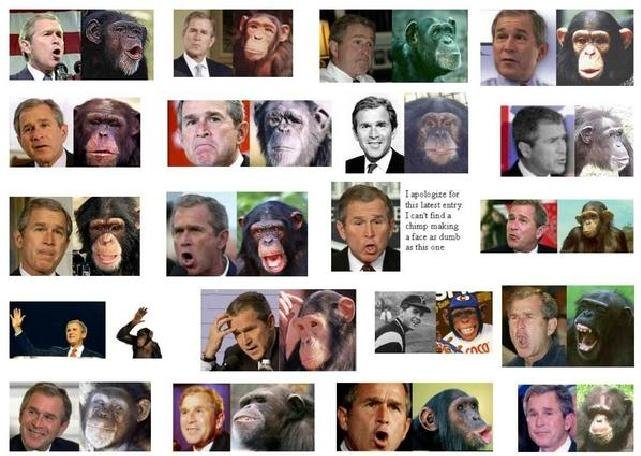 bushapes - proof that george bush is related to apes