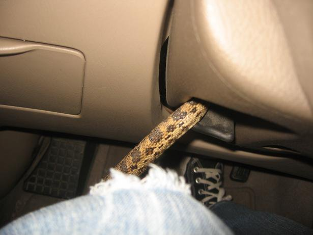 cogn3x6 - this hitchhiker decided to come out of the steering column