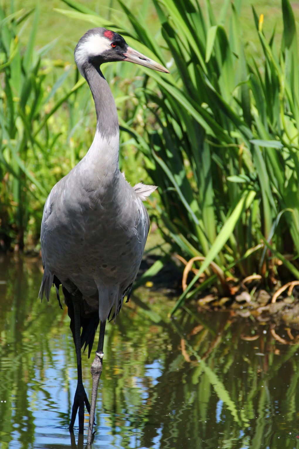crane2 - photographs by me..