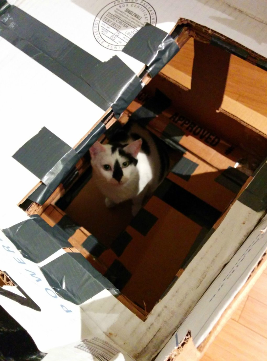efgssal - why don't we build cardboard castle to our cats? this is how to do it.