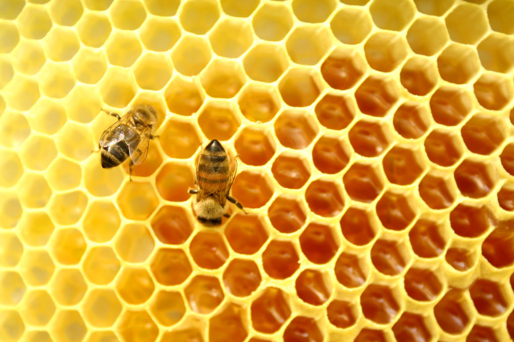 honeycomb - 7 ways we see math in nature