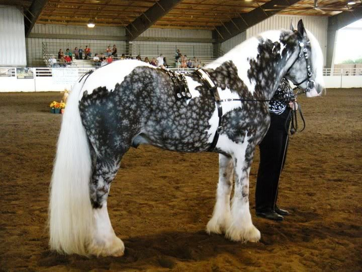 nozoz3m - unusual horse colors