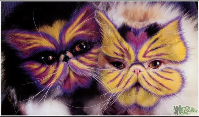 picture10 - cat painting