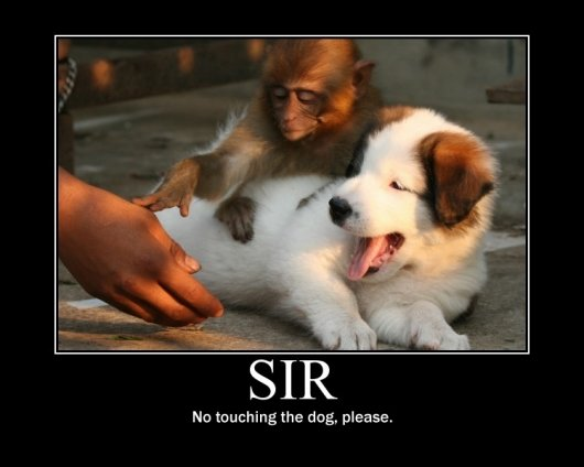 sir - lmao pictures