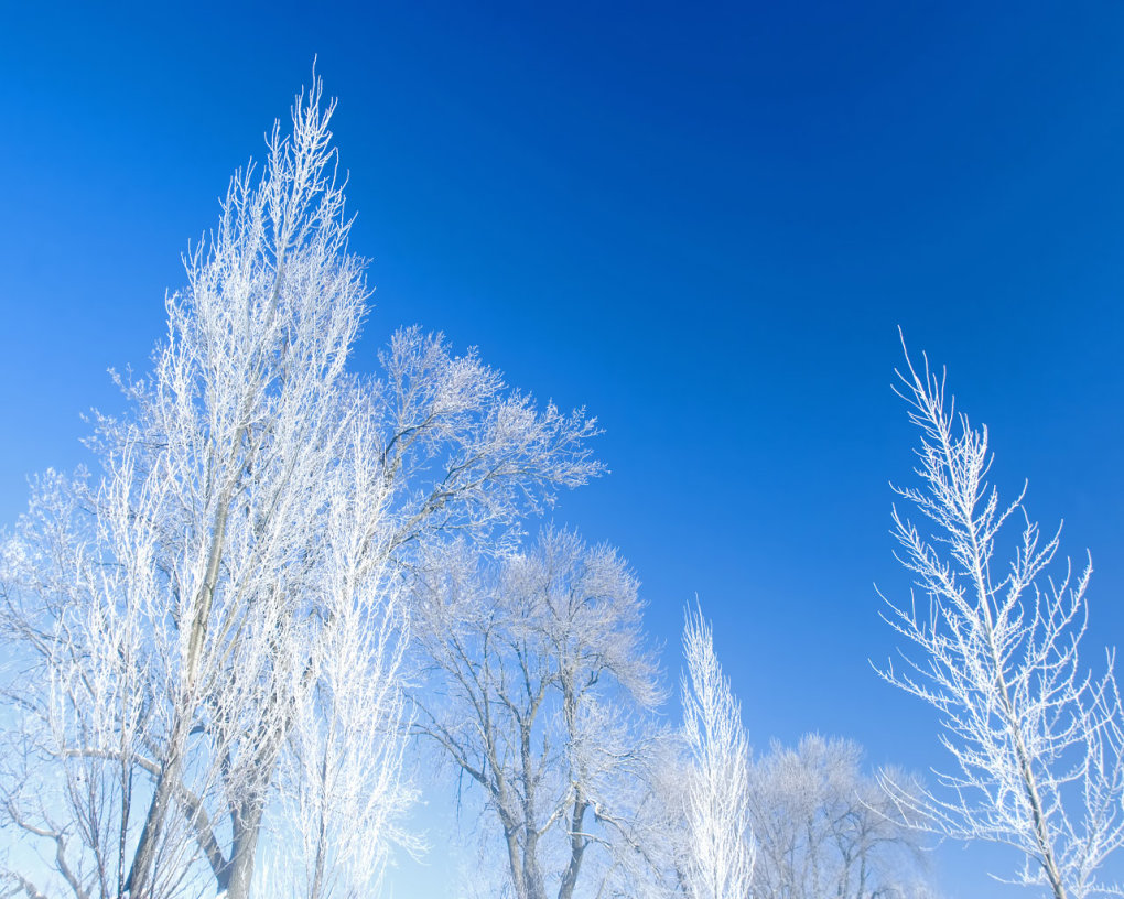 snowtrees - winter: a beauty of earth