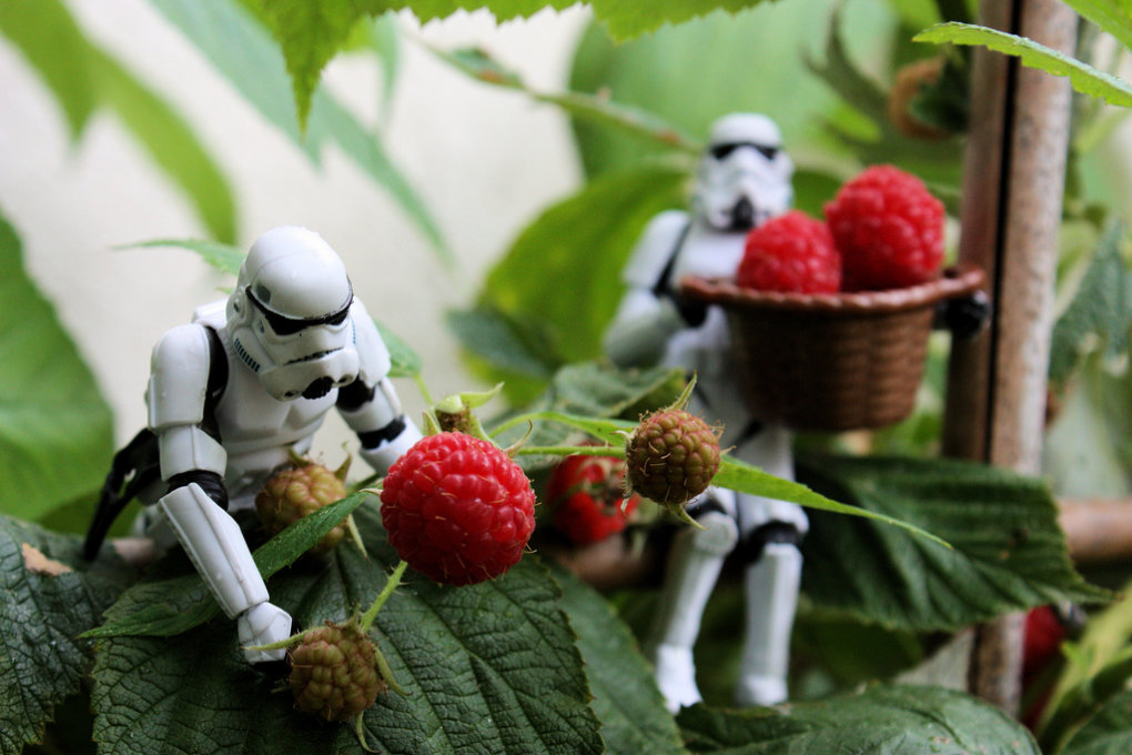starw - storm troopers day off  -  part 4