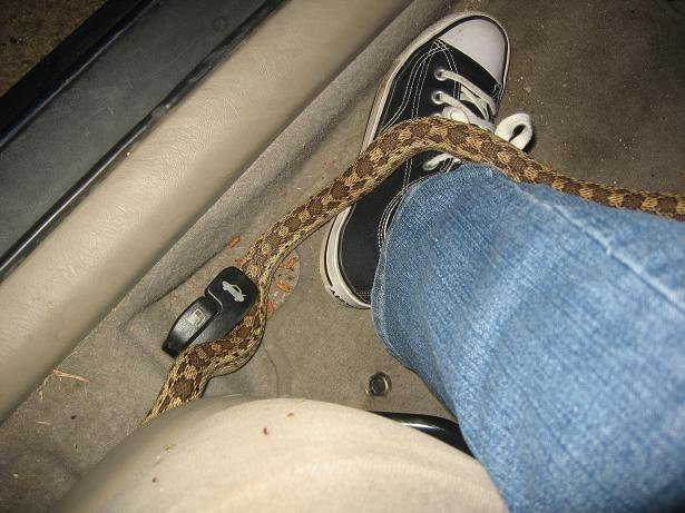yaqxtrv - this hitchhiker decided to come out of the steering column