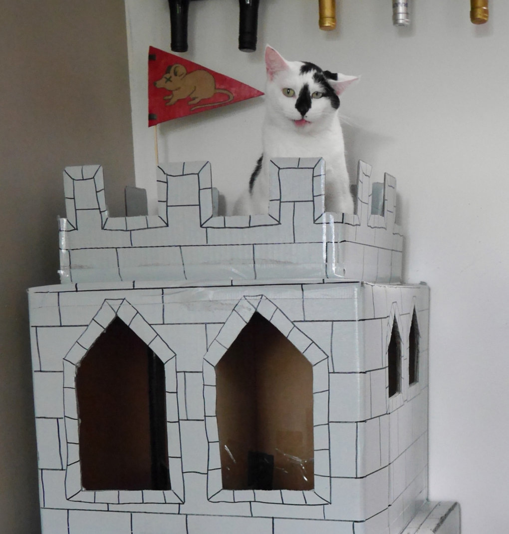 zaox5ny - why don't we build cardboard castle to our cats? this is how to do it.