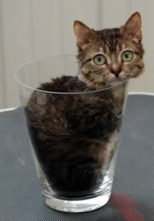 a264 cat - 10 of the world's smallest animals