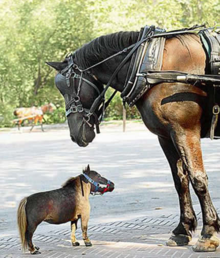 a264 horse - 10 of the world's smallest animals