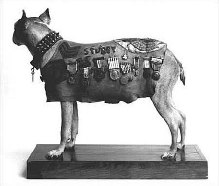 a378 militarydog - most fascinating dogs