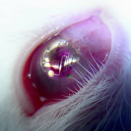 a96806 a503 electronic - some funny/cool contact lenses :)